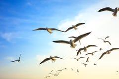Птицы летая на заход солнца (предпосылка) Стоковая Фотография RF