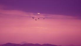 Птицы летая на заход солнца Стоковое Фото