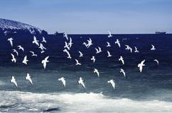 Птицы летая над морем стоковые изображения