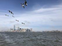 Птицы летая над Нью-Йорком Стоковое Изображение