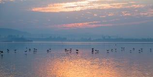 Птицы летая над озером Стоковые Изображения