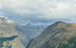 Птицы летая над пиками гор во время пасмурного дня в канадских скалистых горах вдоль бульвара Icefields Стоковое Фото