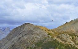 Птицы летая над пиками гор во время пасмурного дня в канадских скалистых горах вдоль бульвара Icefields Стоковые Изображения