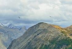 Птицы летая над пиками гор во время пасмурного дня в канадских скалистых горах вдоль бульвара Icefields Стоковые Изображения RF