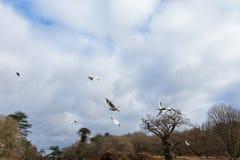 Птицы летая над рекой Стоковые Изображения