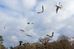 Птицы летая над рекой Стоковое Изображение