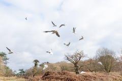 Птицы летая над рекой Стоковое фото RF