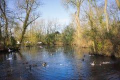 Птицы летая над рекой Стоковое Изображение RF