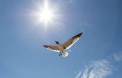 птицы летая небо Стоковые Изображения