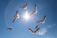 птицы летая небо Стоковое Фото