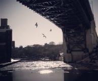 Птицы летая около моста реки Cuyahoga Стоковое фото RF