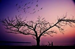 Птицы летая от деревьев Стоковая Фотография RF