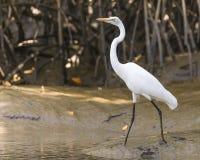 Птицы живой природы Стоковое фото RF