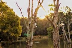 Птицы захода солнца Стоковые Изображения