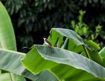 Птицы зацепляют деревья, звуки природы, Buibui Стоковое фото RF