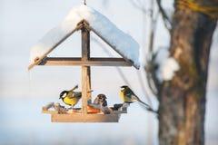 Птицы зимовки в Европе Стоковые Фото