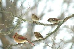 Птицы зимы Нью-Йорка стоковое фото rf