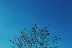 Птицы зимы Стоковая Фотография RF