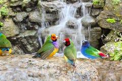 Экзотические птицы наслаждаясь водой Стоковые Фото