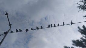 птицы изолировали белый провод стоковое фото