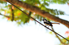 птицы изолировали белый провод Стоковые Изображения RF