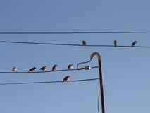 птицы изолировали белый провод Стоковые Изображения