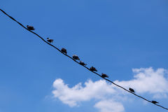 птицы изолировали белый провод Стоковое Изображение RF