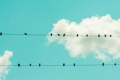 птицы изолировали белый провод Стоковая Фотография RF