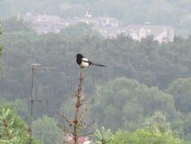 Птицы и их окружающая среда Стоковые Фотографии RF