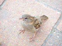 Птицы и их окружающая среда Стоковая Фотография RF