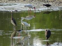 птицы и кипарисы Стоковые Фотографии RF
