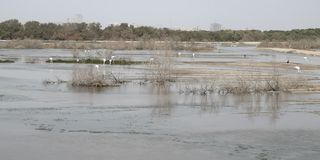 Птицы и фламенко в ландшафте воды озера стоковое изображение