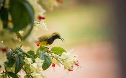 Птицы и fiower Стоковая Фотография