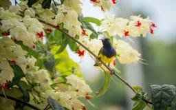 Птицы и fiower Стоковое фото RF