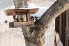 Птицы и goldfinch Titmouse есть семя от фидера птицы в зиме Стоковое Изображение RF