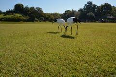 Птицы крана Стоковые Изображения RF