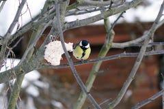 Птицы леса подавать зимы Стоковая Фотография RF