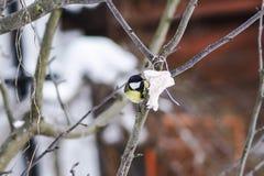 Птицы леса подавать зимы Стоковое фото RF
