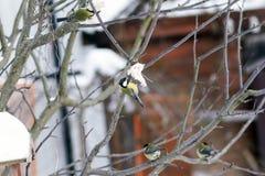 Птицы леса подавать зимы Стоковые Фото