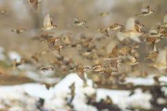 Птицы летают в зиму в снежном ландшафте Стоковая Фотография