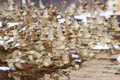 Птицы летают в зиму с стадом Стоковое фото RF