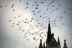 Птицы летают к более теплым землям Концепция перелётных птиц Стоковое фото RF