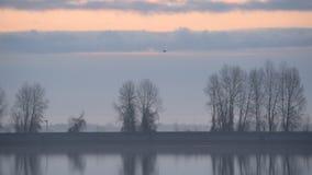 Птицы летают на сумрак над спокойной поверхностью воды озера или реки видеоматериал