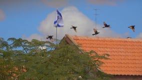 Птицы летают против флага Израиля сток-видео