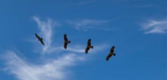 птицы летают Стоковые Фото