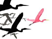 Птицы летают Стоковая Фотография