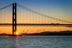 Птицы летая на заход солнца под мостом Стоковая Фотография
