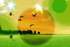 птицы летая небо Стоковая Фотография RF