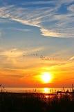 птицы летая пышный заход солнца Стоковая Фотография
