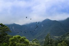 Птицы летая свободно в природу стоковые изображения